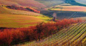 Le Langhe: cA.m.M.iniamo alla scoperta delle loro colline e dei loro grandi vini