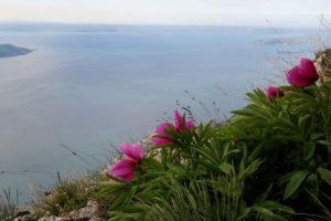 Il sentiero delle peonie sul Monte Denervo